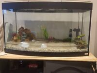 3ft fluval fish tank comes with filter and other accessories