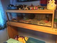Corn snake and set up