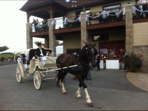 Calèche Robert à vendre ou échanger contre remorque à chevaux