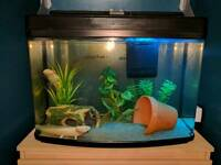 Interpet Fish Pod Aquarium 2ft (fishtank)
