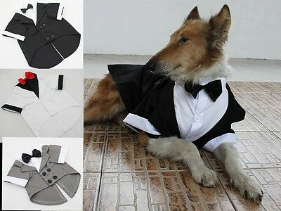 LARGE Dog tuxedo, black-tie affair, formal apparel, dressed up (Black Tie Tuxedo Kostüme)