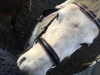 Looking for an experienced rider to hack with