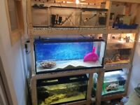 Fish tanks and accessories
