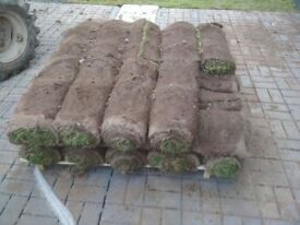 Grass turf in rolls