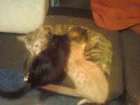 Kittens In Need of a Loving Home