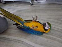 SILLY TAME BABY BLUE & GOLD MACAW