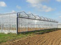 Commercial glasshouse, polytunnels, horticultural nursery wanted.