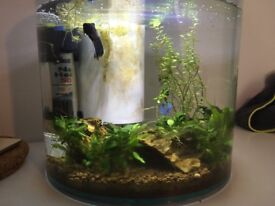 Male Betta fish with tank and heater
