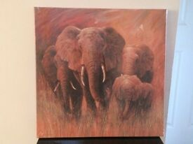 Brand New Elephant Print Canvas from Dunelm 50 x 50cm
