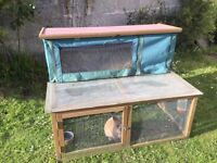 Rabbit hutch and run with very cute and friendly rabbit