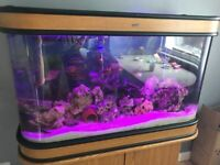 Acrylic fish tank and accessories