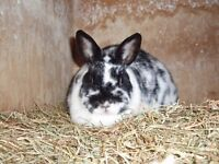 24 Rescue Rabbits all in need of a good home. Varying breeds and colours.. 1st post out of 3.