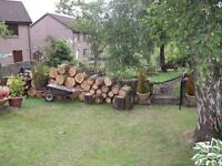 Newly cut pine and birch wood for sale. Best offer will be accepted.