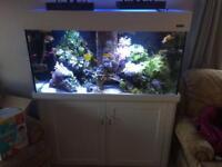Aqua Reef 400
