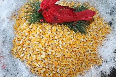 5 lbs FRESH  EAR KERNEL CORN*SQUIRREL*DEER*BIRD FEED-ART-CRAFTS