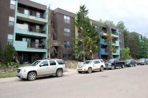 Concord Apartments - 1 Bedroom Apartment for Rent