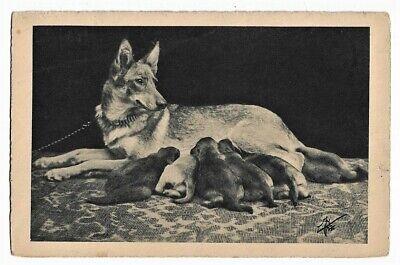 GERMAN SHEPHERD ALSATIAN DOG w/ suckling puppies vintage c1920s TUCK postcard for sale  Shipping to Nigeria