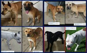 Found pets - Gosnells & surrounding areas Gosnells Area Preview