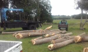 We will pick up any Native Hardwood Tree from 800mm wide free. Worongary Gold Coast City Preview