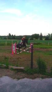 Sport Horse for lease on your property