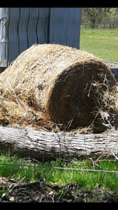 Mulch Hay For Sale