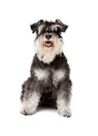 Medium size dog carrier for sale