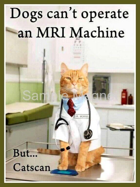 "CAT MRI Funny Fridge Magnet 4"" x 3"""