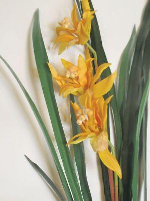 Terrarienpflanze-Regenwald, Spitzblättrige Orchidee 3 orangefarbene Blüten