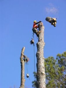 Your Local Tree Service! (647)454-6127