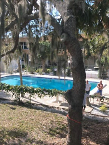 Beautiful 1bd Port Charlotte avail. Now- May