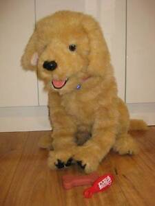 Fur Real Dog Biscuit Athelstone Campbelltown Area Preview