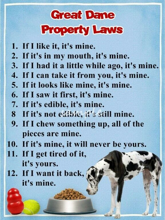 GREAT DANE Property Laws Magnet Personalized With Your Dog