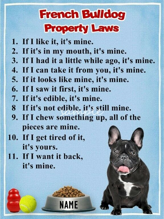 BLACK FRENCH BULLDOG Property Laws Magnet Personalized With Your Dog