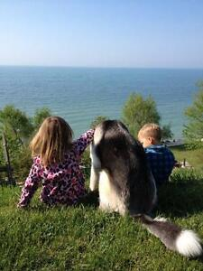Pet Friendly On-the-Water Cottages July 29-Aug 5 in Kingsville