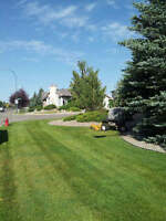 Lawn Care and Yard Services