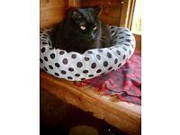 Fluffy long haired black cat