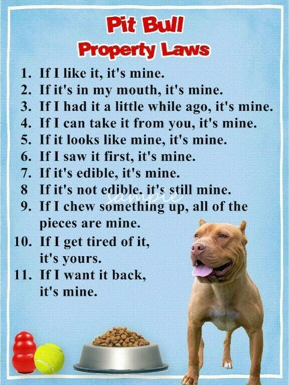 PIT BULL Property Laws Magnet Personalized With Your Dog