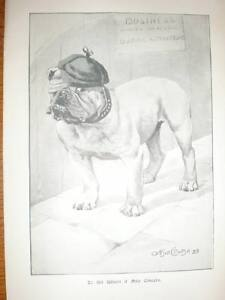 To All Whom It May Concern Arthur Cooke dog Print 1900