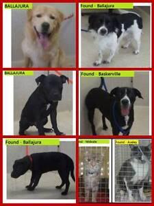 Found pets  City of Swan / Gidge / Bullsbrook / Belmont etc Swan Area Preview