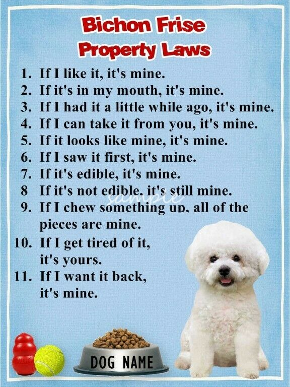 BICHON FRISE Property Laws Magnet Personalized With Your Dog