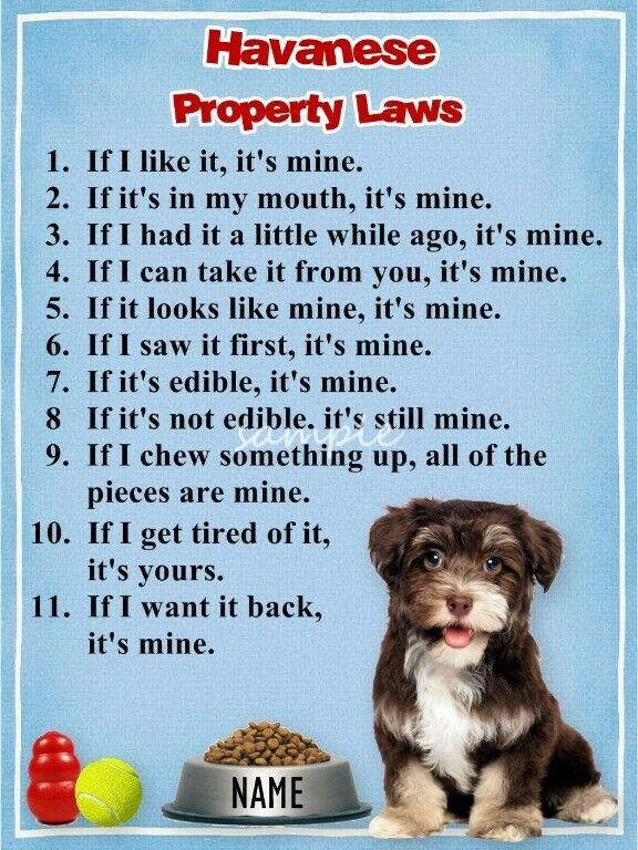 HAVANESE Property Laws Magnet Personalized With Your Dog