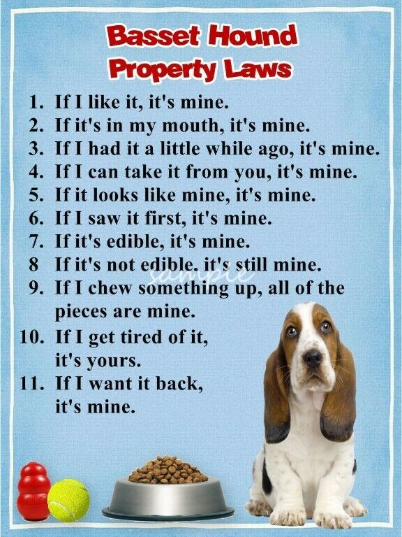 BASSET HOUND Property Laws Magnet Personalized With Your Dog