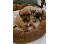 puppies ready for loving homes