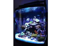 boyu 125 litre marine fish tank skimmer wave maker heater lights pump live sand all working