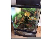Tree Frogs and Crested Gecko complete set up