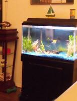 AWESOME AQUARIUM and stand....et cetera!