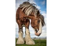 Yard, stables , smallholding for horses