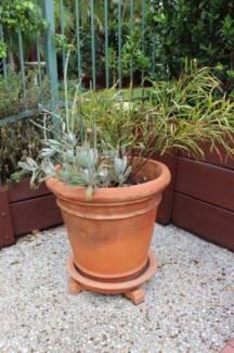 potted plants succulent's