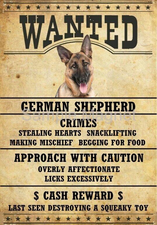 """GERMAN SHEPHERD #2  Wanted Poster Fridge Dog Magnet LARGE 3.5"""" X 5"""""""