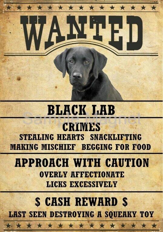 "BLACK LABRADOR RETRIEVER LAB Wanted Poster Fridge Dog Magnet LARGE 3.5"" X 5"""